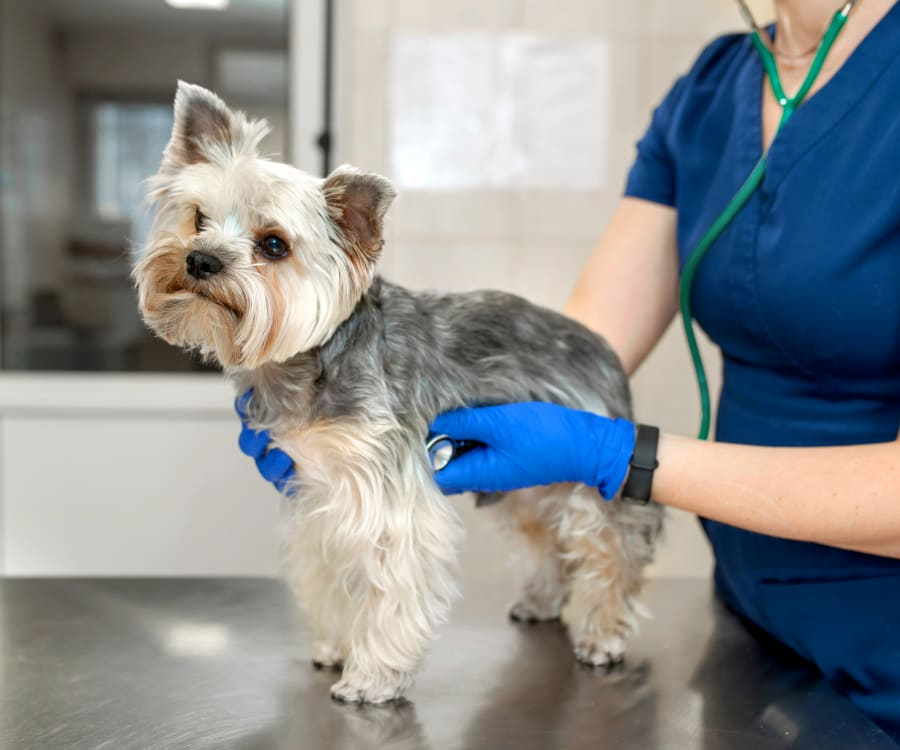 West Chester Veterinary Medical Center | West Chester Speciality & Emergency Vet